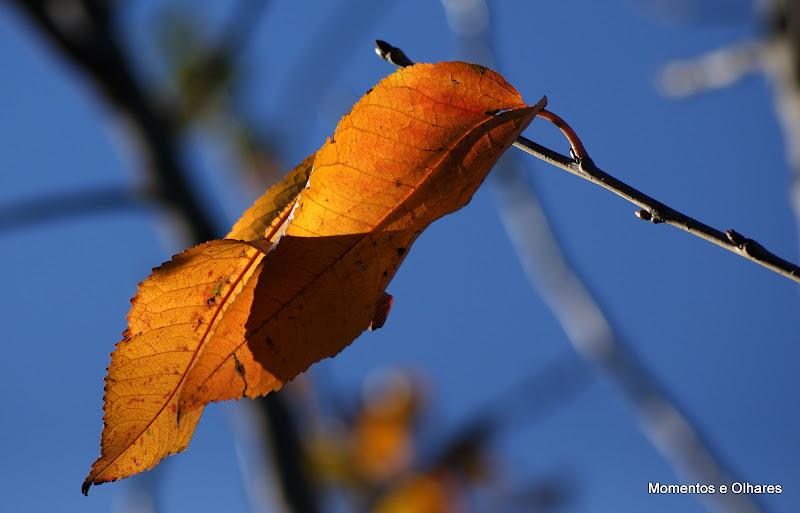 Outono no quintal, folhas de cerejeira