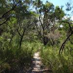 winding through the bush  (114349)