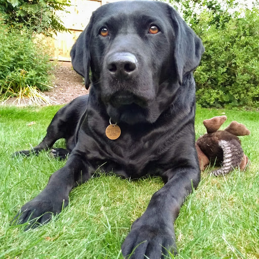 Debbie Doyle