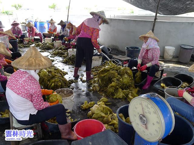 鄉鎮農特產-雲林大埤鄉是酸菜的故鄉