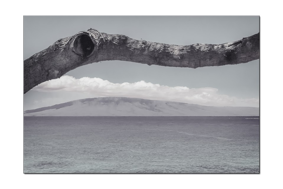 A tree branch follows the contour of the Island, Maui, Hawaii, Landscape Photography, fine art photography, Travel Photography