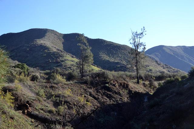 dried out landscape