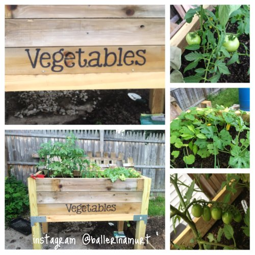 Vegetable Garden 1/2 Way