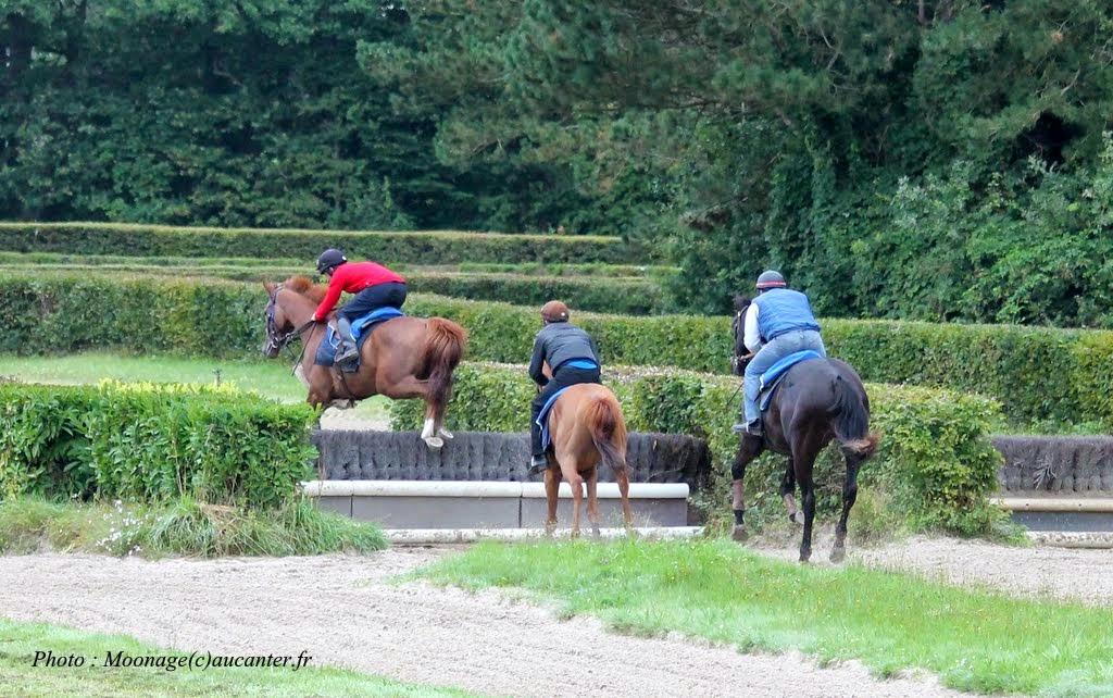 Photos Lamorlaye entrainement obstacle 14-08-2014 IMG_2897
