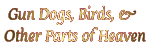Gun Dogs, Birds & Other Parts of Heaven