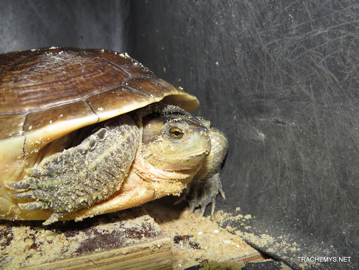mes tortues (BK) - Page 12 IMG_4498