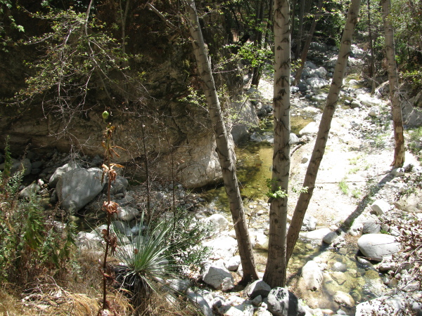 Bear Canyon joining Arroyo Seco