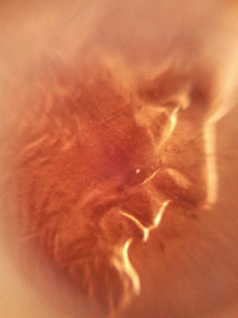 Lincoln penny under a microscope