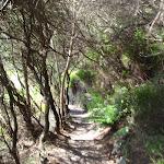 Track through Blue Mountains NP (95617)