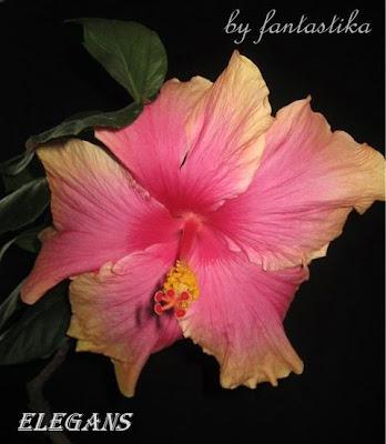 Красота без границ - Страница 7 Elegans