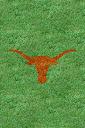 Texas%252520Longhorns%252520Grass.jpg