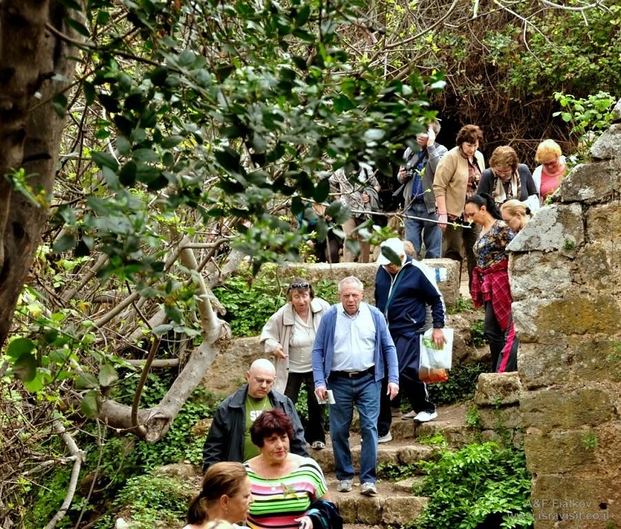 Национальный парк Баниас. Экскурсия на Голанские высоты. Гид в Израиле Светлана Фиалкова
