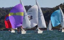 J/24s sailing under spinnaker
