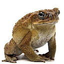 Unstable Toad