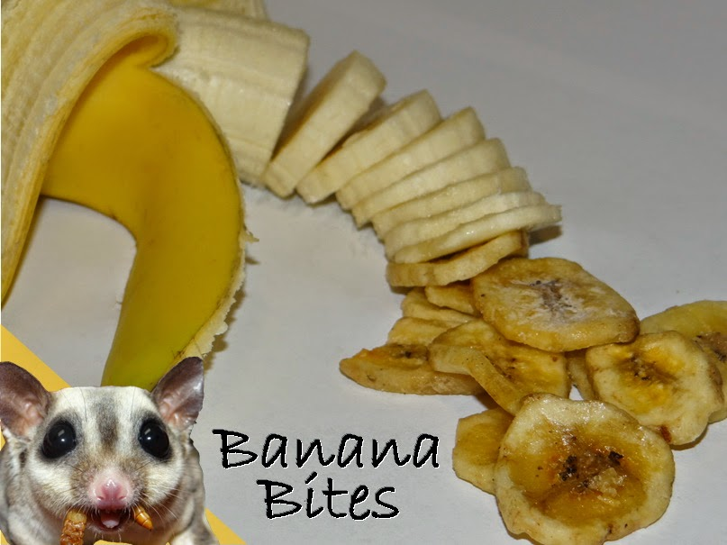 Banana Bites treats for sugar gliders
