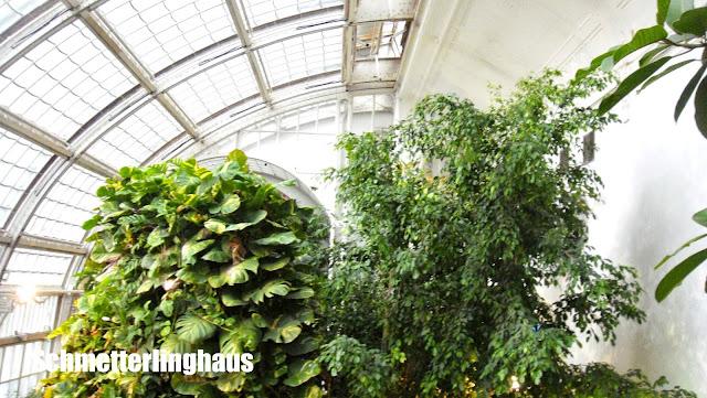 Schmetterlinghaus, Vienne, serre, elisaorigami, travel, blogger, voyages, lifestyle