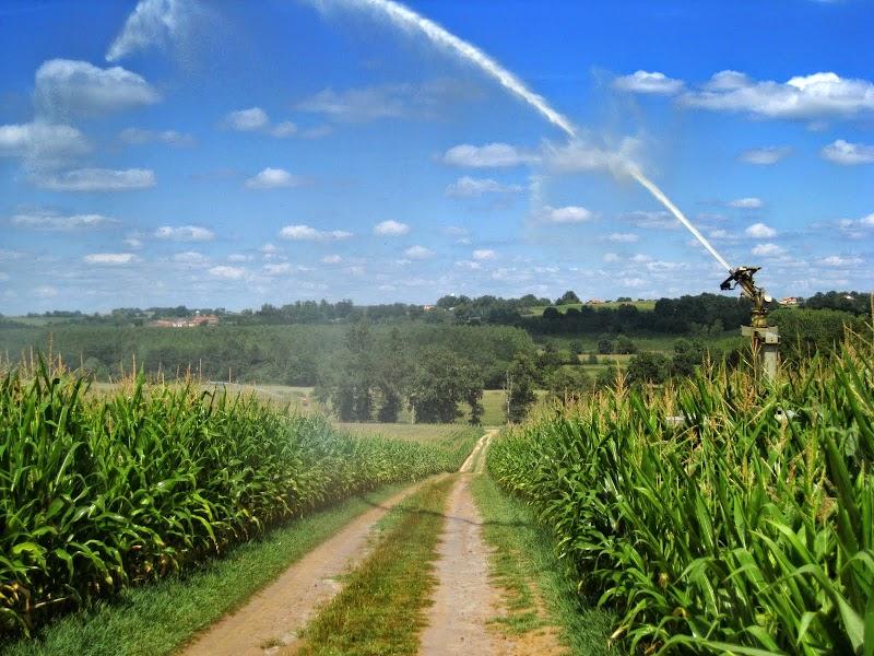 Maisbewässerung