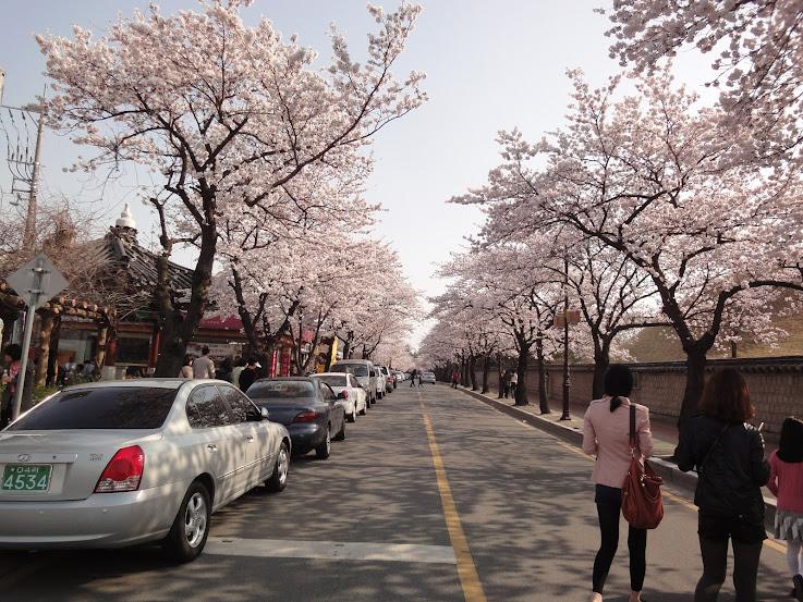 Gyerim Road Cherry Blossoms in Gyeongju