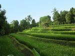Banyuatis: balade dans les rizières de Kedis