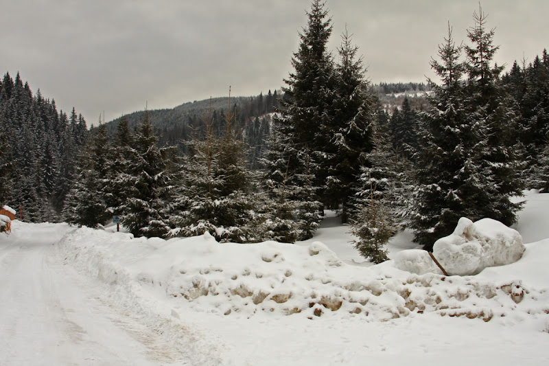 Lacauti iarna zapada schi brazi