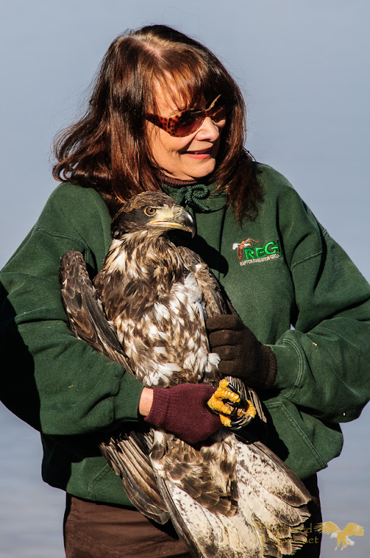 Marge Gibson of Raptor Education Group, Inc. craddles a rehabilitated bald eagle while fielding questions from the crowd.