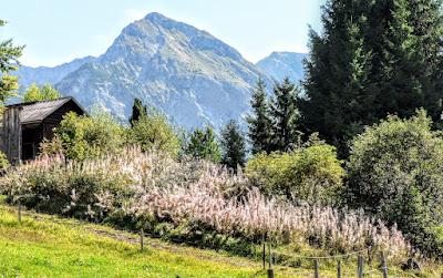 Blick Rotspitze vom Parkplatz Strausberg nahe Strausberghütte