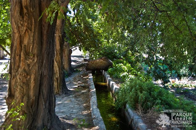 Árboles frente a la Casa de la Cuarta Esclusa
