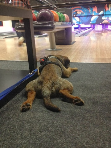 Border Terrier Charly blickt in die Bowling Bahn