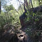 Following the bushtrack (131170)
