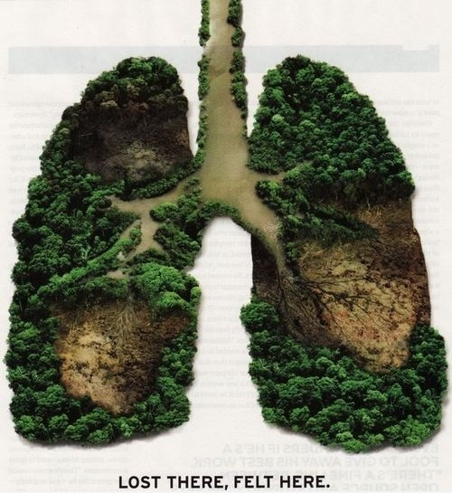 The Earth's Lungs