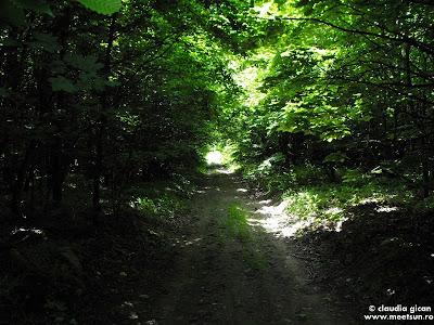 drumuri forestiere in Macin