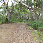 Road into Boomeri campsite
