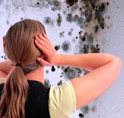 почему цветут стены