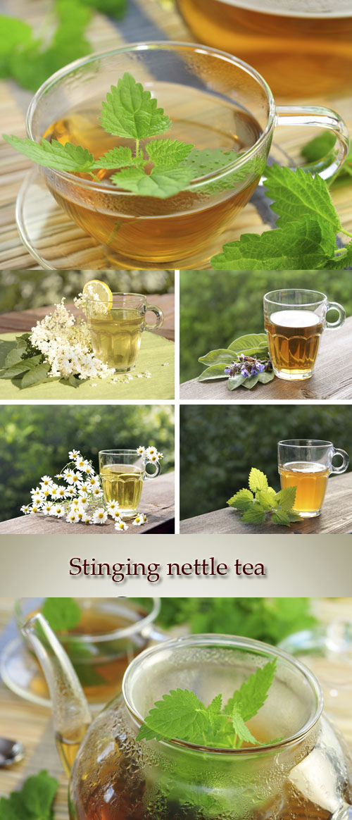 Stock Photo: Stinging nettle tea, herbal tea