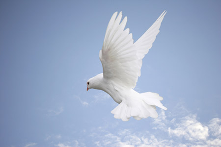 Goddess Healing Wisdom Of Birds The Spirit Of The Dove Image