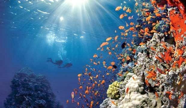 alimentacion corales
