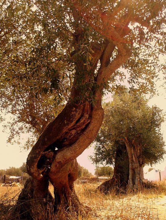 Sermão do Monte é o trechoa mais conhecido do Novo Testameto. [Bibliologia]