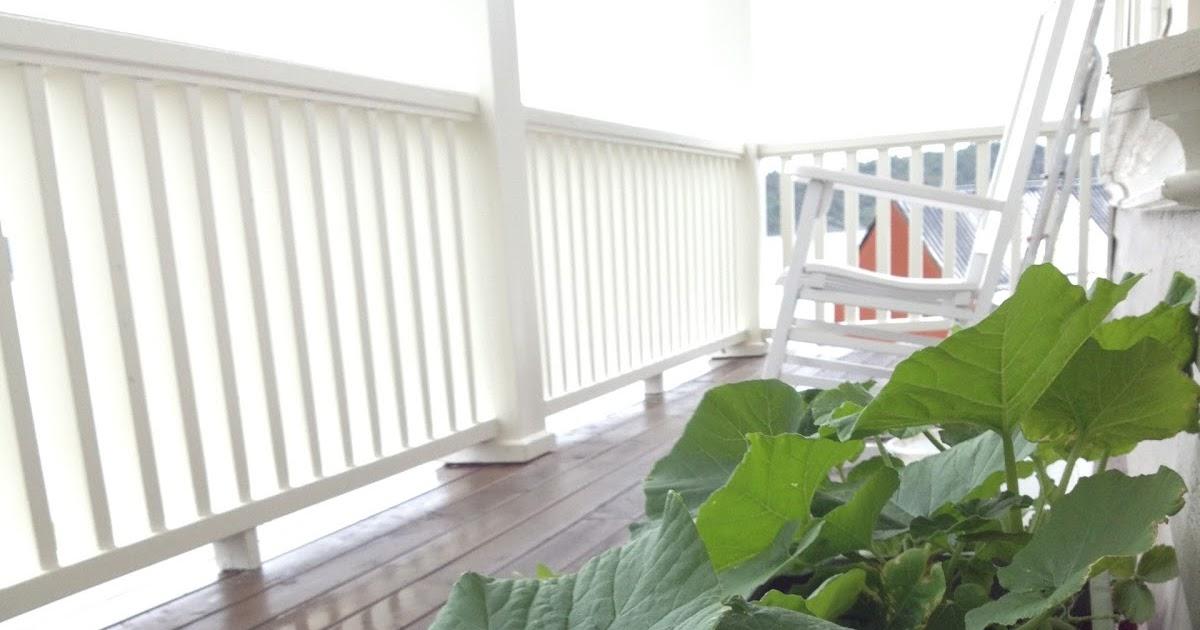 A Seaside House: Høstplanter
