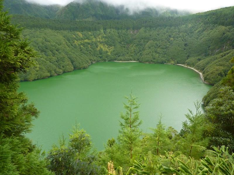 Açores- Natureza viva P1000689