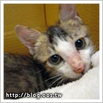 2cats ★ 回診拿藥+注射疫苗 Mini & Cooper