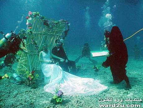 اغرب حفلات زفاف فى ورد للفنون