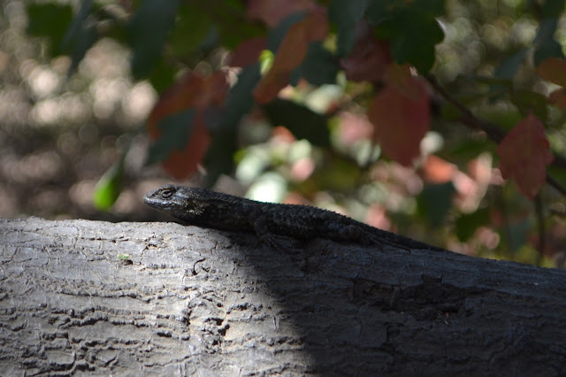 lizard on a tree branch