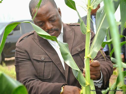 Le président Kabila dans un champ de maïs de l'industrie agropastorale de Bukanga Lonzo dans la province du Bandundu le 5/03/2015 en RDC lors de la  première récolte. Radio Okapi/Ph. John Bompengo