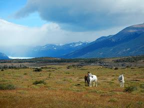 El Calafate, Cabalgatas del glaciar, Patagonie