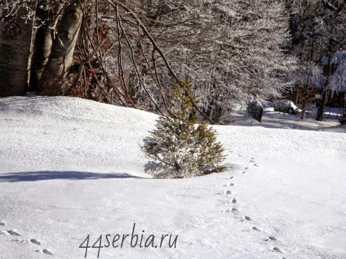 Путь к лыжне