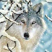 к чему снятся волки?