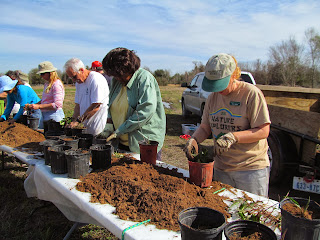 Volunteers potting up newly rescued prairie plants at Willow Waterhole #3 on February 22, 2014