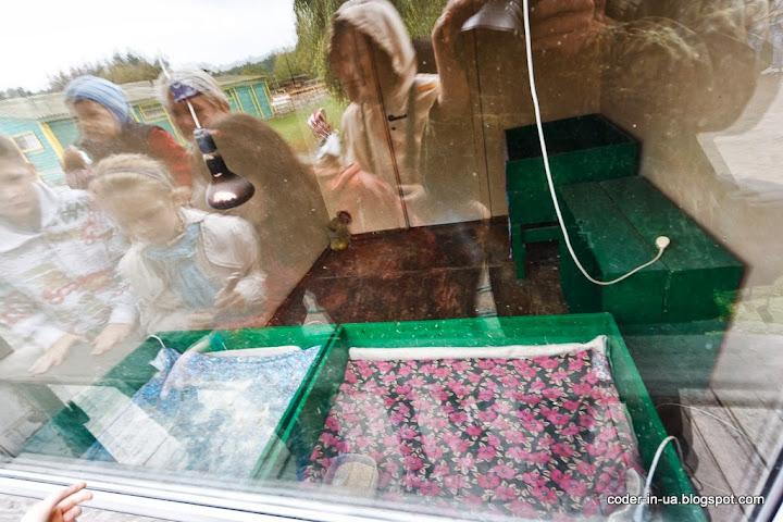 ясногородка.страусиная ферма