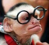 kera gila pakai kacamata