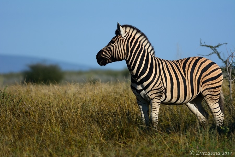 Namibia+2014_089.JPG